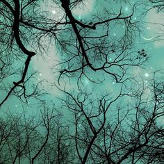 Starry Trees
