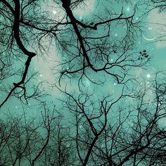 "Celestial Art sagittarius moon and star trees night -- Raceytay has often said, ""I don't take photographs, I make photographs."""