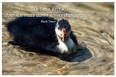 Mein Papa sagt...  Ich liebe Kritik, aber ich muss damit einverstanden sein.  Mark Twain    Weisheiten und Zitate TÄGLICH NEU auf www.MeinPapasagt.de