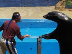 Amazing shows & fun at Sea World Orlando Seymour & Clyde