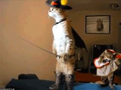 Funny-Cat-72
