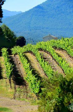 les belles couleurs des vignes du domaine vico durant l'été du centre corse
