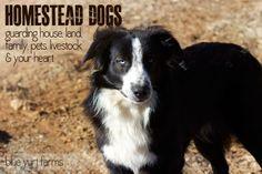 Homestead Dogs :)