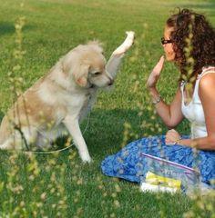 Curso de Cuidado de cachorros de perros  http://www.formaciononlinegratis.net/curso-de-cuidado-de-cachorros-de-perros/