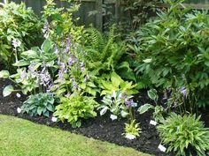 Farne Hosta Blumen Pflanzen schattige Standorte kombinieren