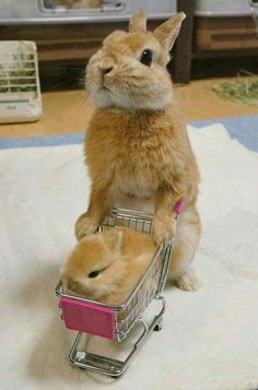 ♥ Small Pets ♥ Bunny & baby bunny go shopping Don't you just love shopping for small animal products? It's such fun finding just the right habitat, cage or hutch for your pet rabbits, hedgehogs, hamsters or guinea pigs. And who doesn't love to watch… Baby Animals Super Cute, Cute Baby Bunnies, Cute Little Animals, Cute Funny Animals, Cute Babies, Funny Bunnies, Cutest Animals, Big Bunny, Fluffy Bunny