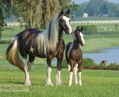 Beautiful Mare and her foal | By: Mark J. Barrett