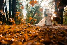 Fall wedding and leaves