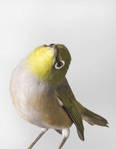 Красочные портреты экотических птиц / Leila Jeffreys