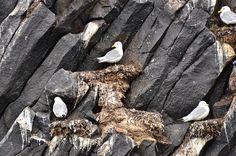 Rubini Rock bird colony, Hooker Island