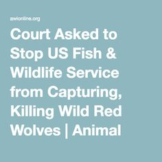 Court Asked to Stop US Fish & Wildlife Service from Capturing, Killing Wild Red Wolves | Animal Welfare Institute