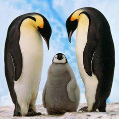 January 20 – Penguin Awareness Day