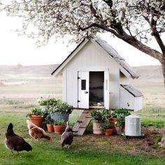Diy Chicken Coop Plans, Chicken Coop Designs, Backyard Farming, Chickens Backyard, Mini Farm, Ivy House, Hobby Farms, Farm Gardens, The Ranch