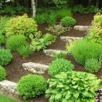 Adding steps into the hill; landscaping with many different plants and mulch.