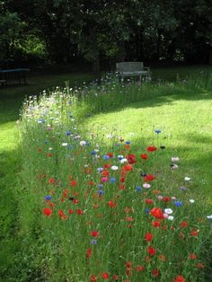 Nice mix of grass and flowers gives an original look to your garden! ++Here