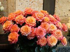 Free Spirit - Orange Rose #OrangeRose