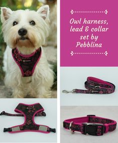 Cute dog harness, lead and collar set by Pebblina. This adorable collection features an owl design. Soft padding around the collar and lead handle to ensure not only comfort for your beloved fur child but also for you! Cute Dog Harness, Dog Facts, Online Pet Supplies, Cute Owl, Best Dogs, Sailor, Handle, Fur, Pets