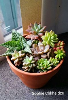 Succulent arrangement in Terra cotta