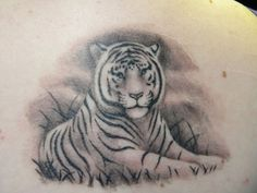 white tiger tattoo designs