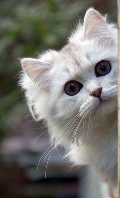 peek-a-boo! .. I see you! :))