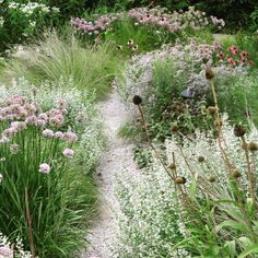 #buildingagarden #flowers #gardendesign #landscapearchitecture #Prairie #meadow #inspiration #imageviapinterest