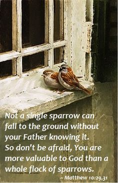Matthew 10:29b, 31 ~ He sees the sparrow fall
