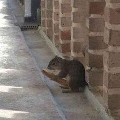 Der kleine Racker hat ein Brot gefunden.