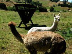 Birthday Weekend Away - Rotorua