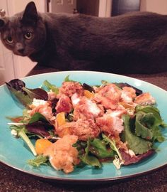 Asian chicken salad and cat