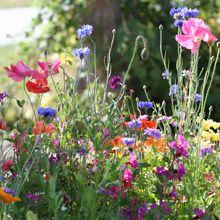 Pacific Northwest Wildflower Blend from West Coast Seeds
