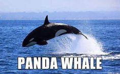 If Animal Names Were Honest - 20 Pics