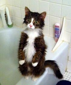 You're Gonna Wa…wa…wash Me?! Run Pussy Gato Run