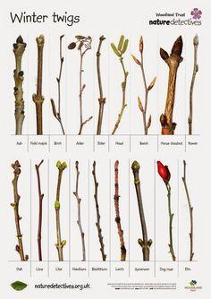 Google+ winter twigs