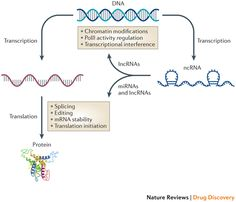 The majority of currently available drugs and tool compounds exhibit an inhibitory mechanism of action and there is a relative lack of pharmaceutical agents that are capable of increasing the activity of effectors or pathways for therapeutic benefit. Indeed, the upregulation of many genes, including tumour suppressors, growth factors, transcription factors and genes that are deficient in various genetic diseases, would be desired in specific situations. Recently, key roles for regulatory…