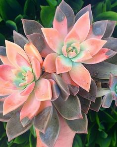 Succulents - Bomb photo by and succs 💚 succulove it! - The Effective Pictures We Offer You About cactus costume A quality picture can tell you many thing - Succulent Gardening, Planting Succulents, Container Gardening, Garden Plants, House Plants, Planting Flowers, Succulent Plants, Succulents Drawing, Indoor Succulents