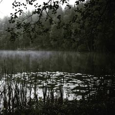 Cloudy day  but #niceday #raindrops #forest #lake #reflection #green #trees #nature #landscape #cloudy #feelfreefeed  #autumn #luonto #järvi #visitfinland #syksy #natur #skog #sjö by marieelisabeths