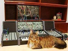 cat + synth