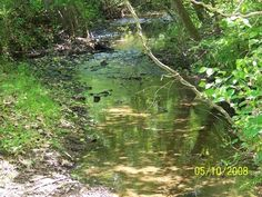 It's peaceful sitting by the creek...