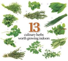 13 herbs to grow in your kitchen, with tips on getting started and keeping them growing | OregonLive.com