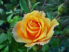 Rose d'automne sur les quais de Bordeaux
