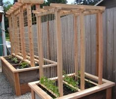 think about a variation of this--next door neighbor privacy bean trellis. Think about a pallet as a base or perhaps that old picnic table???