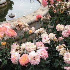 pinterest // @reflxctor #flowers