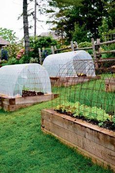 Niki Jabbour - The Year Round Veggie Gardener: Mini Hoop Tunnels in Summer- cedar for built in garden beds? Raised Vegetable Gardens, Veg Garden, Raised Garden Beds, Raised Beds, Raised Gardens, Veggie Gardens, Garden Boxes, Vegetable Gardening, Vegetable Garden Design