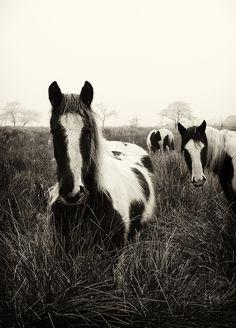 Horses on a misty morning at Glenhordial, Omagh