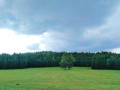 Les, pole a stromy na Šumavě