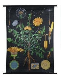Dandelion botanical poster. This site has all kinds of random and slightly creepy posters, including a series on animals.