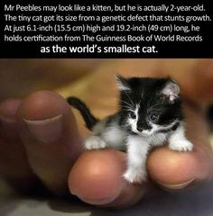 The smallest cat in the world.