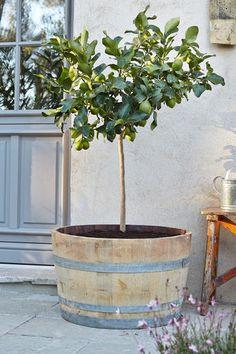 Robuste bac en bois de chêne en forme de demi tonneau, conçu pour un petit arbre ou une grande plante, contenance 30 L, diamètre 70 cm, 34,90 euros, Leroy Merlin.