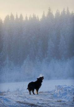 photo by Juha Poutanen