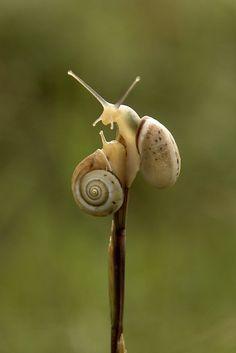 snail whispers